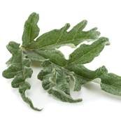 Organic Artichoke Leaf Powder 160µm Heat Treated