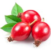 Organic Rose Hip Fruit Whole