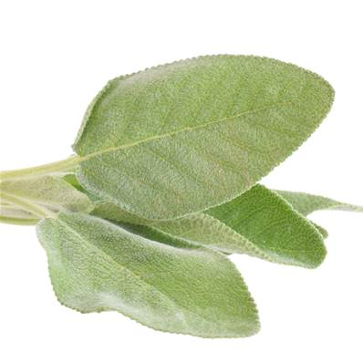 Sage Leaf Extraction Cut