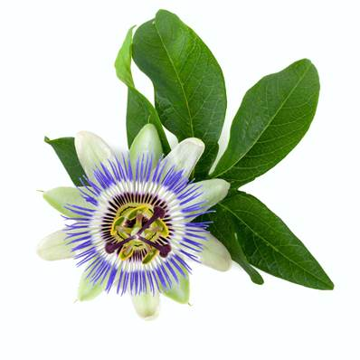 Organic Passion Flower Aerial Part Extraction Cut 1cm