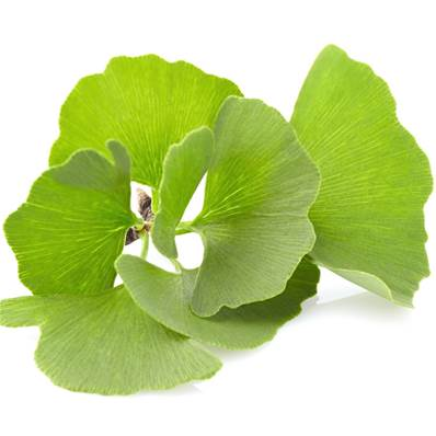 Organic Ginkgo Biloba Leaf Powder 300µm Heat Treated