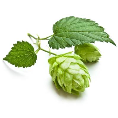 Hops Flower Powder 300µm Heat treated