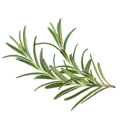Organic Rosemary Leaf Cut