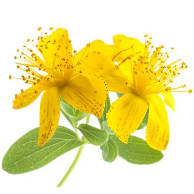 Organic St John's Wort Plant Powder 300µm Heat Treated