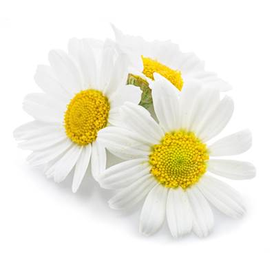 Chamomile Flower Whole Sifted 1mm