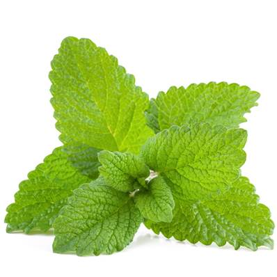 Lemon Balm Leaf Whole