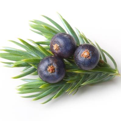Juniper Berry PE 1/1
